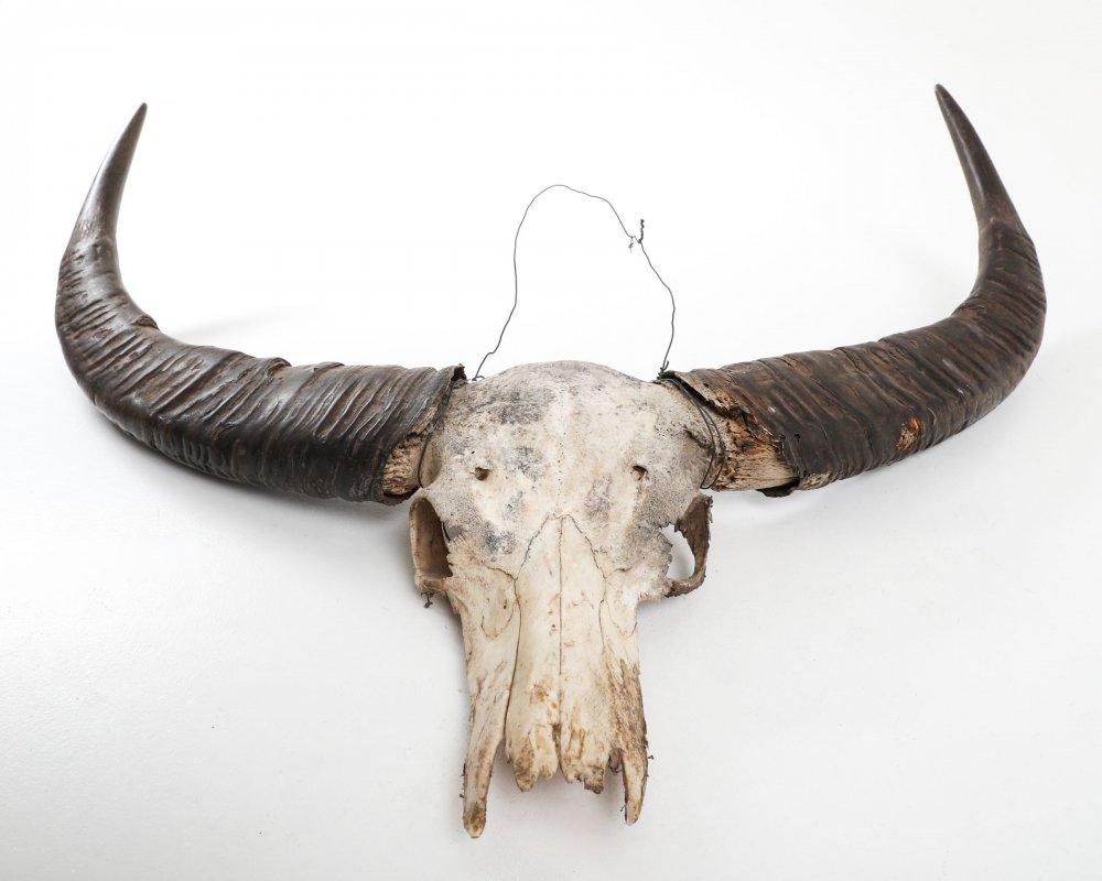 item/637-horns--scull.html